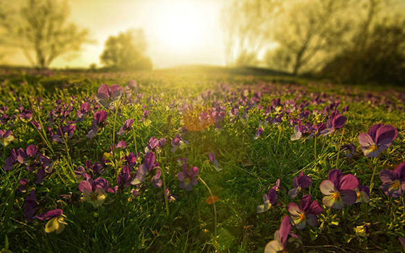 The Maintenance, History And Ecological Principles Of Wildflower Meadows