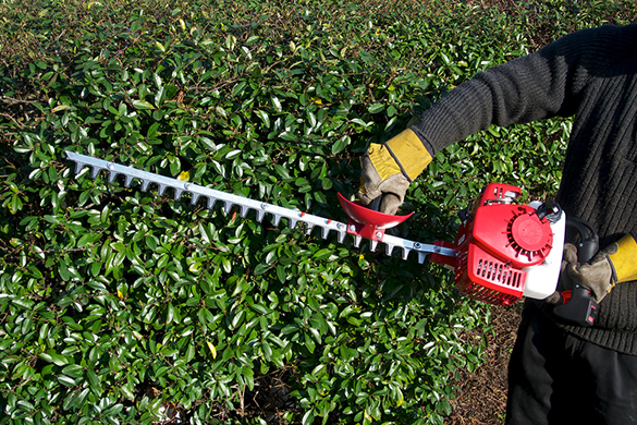 Safe Use Of Handheld Hedge Cutters