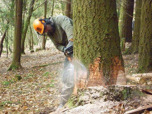 Felling And Processing Trees Up To 380MM