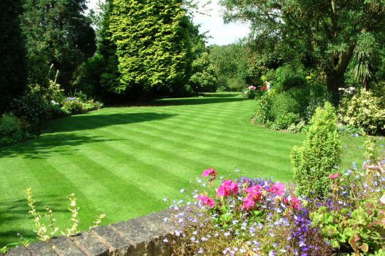 **New** Basic Lawn Care
